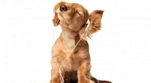 Kartal Köpek Eğitimi