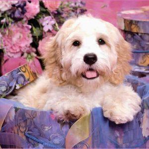 Şanlıurfa köpek eğitimi