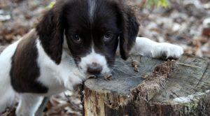 Manisa Köpek Eğitimi