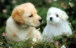 Küçükçekmece Köpek Eğitimi