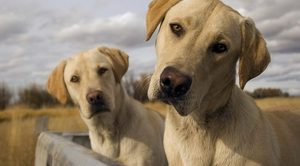 Aksaray Köpek Eğitimi