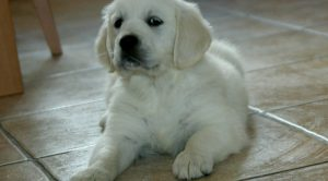 Zonguldak Köpek Eğitimi