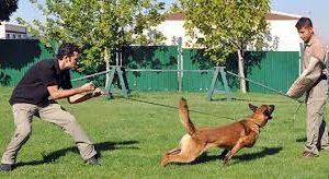Köpek Eğitim Ücretleri Ne Kadar?
