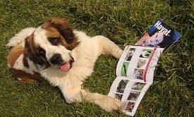 Köpek Eğitim Okulu