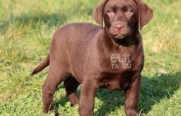 Köpek Eğitimi Sarıyer