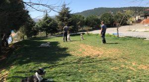 İngiliz Bulldog Köpek Eğitimi Eğitmeni