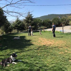 Köpek Eğitimi Zeytinburnu Adresi
