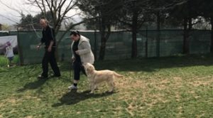 Köpek Eğitimi Eyüp Adresi