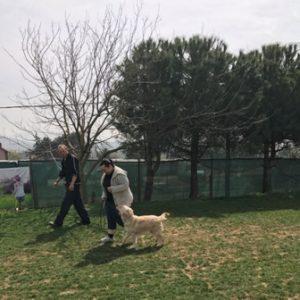 Alman Kurt Köpeği Eğitimi