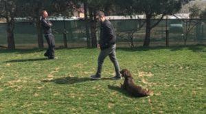 Terrier Köpek Eğitimi Nasıl Verilir?