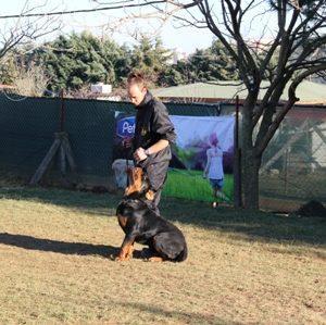 Köpek Eğitimi AmericanCocker İstanbul