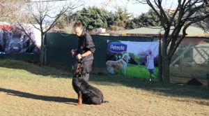 Küçükçekmece Köpek Eğitim Merkezi