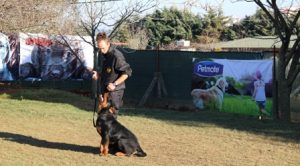 Köpek Eğitimi CavalierKing Charles İstanbul
