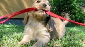 Rize Köpek Eğitimi