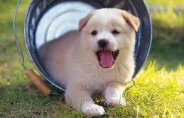 Amasya Köpek Eğitimi