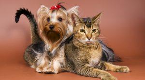 Afyonkarahisar Köpek Eğitimi