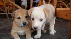 Aydın köpek eğitimi