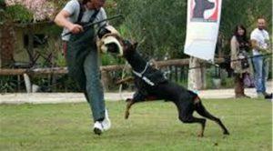 Köpek Eğitimi BeylikDüzü