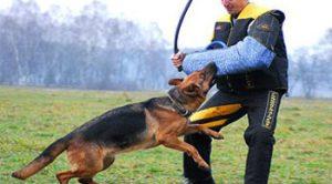 Üsküdar Köpek Eğitim Merkez