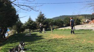 Yavru Rottweiler Eğitimi