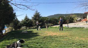 Köpek Eğitimi St Bernard İstanbul