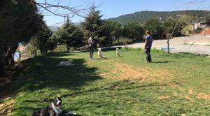 Köpek Eğitimi Dalmaçyalı İstanbul