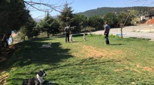 Ümraniye Köpek Eğitim Merkezi İstanbul