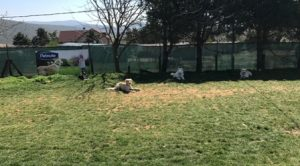 Köpek Eğitimi Spitz İstanbul