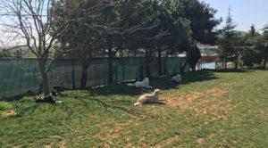 Beyoğlu Köpek oteli