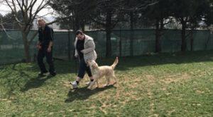 Kafkas Çoban Köpek Eğitimi Eğitmeni