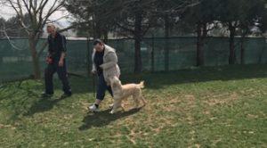Köpek Eğitimi Doberman İstanbul
