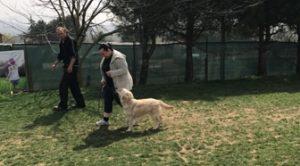 Havanese Köpek Eğitimi