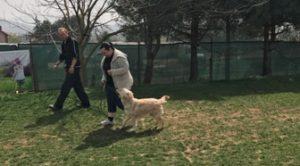 Kâğıthane Köpek Eğitim Çiftliği