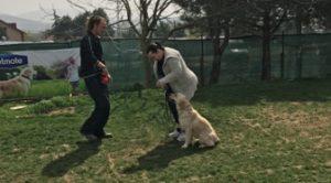 Köpek Tasma Eğitimi Nasıl Verilir?