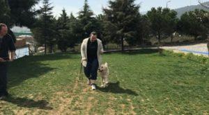 Köpek Eğitimi Husky İstanbul