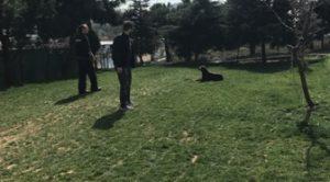 Köpek Eğitimi Pekinez İstanbul