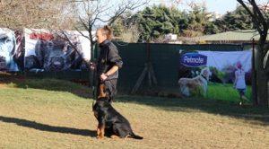 Köpek Eğitimi Gordon Setter İstanbul