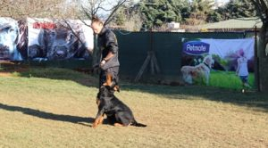 Kozyatağı Köpek Eğitimi