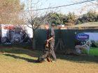 Büyükçekmece Köpek Eğitimi